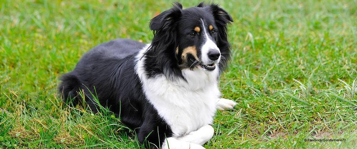 Le chien héroïque a sauvé un enfant tombé dans la rivière à Melisey