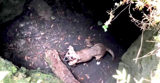 Dramático rescate de una perra que había estado atrapada en una cueva por semanas