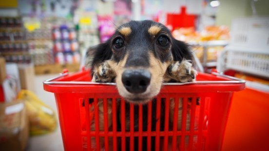 A dog laying in a basket at a store | Photo: Getty Images