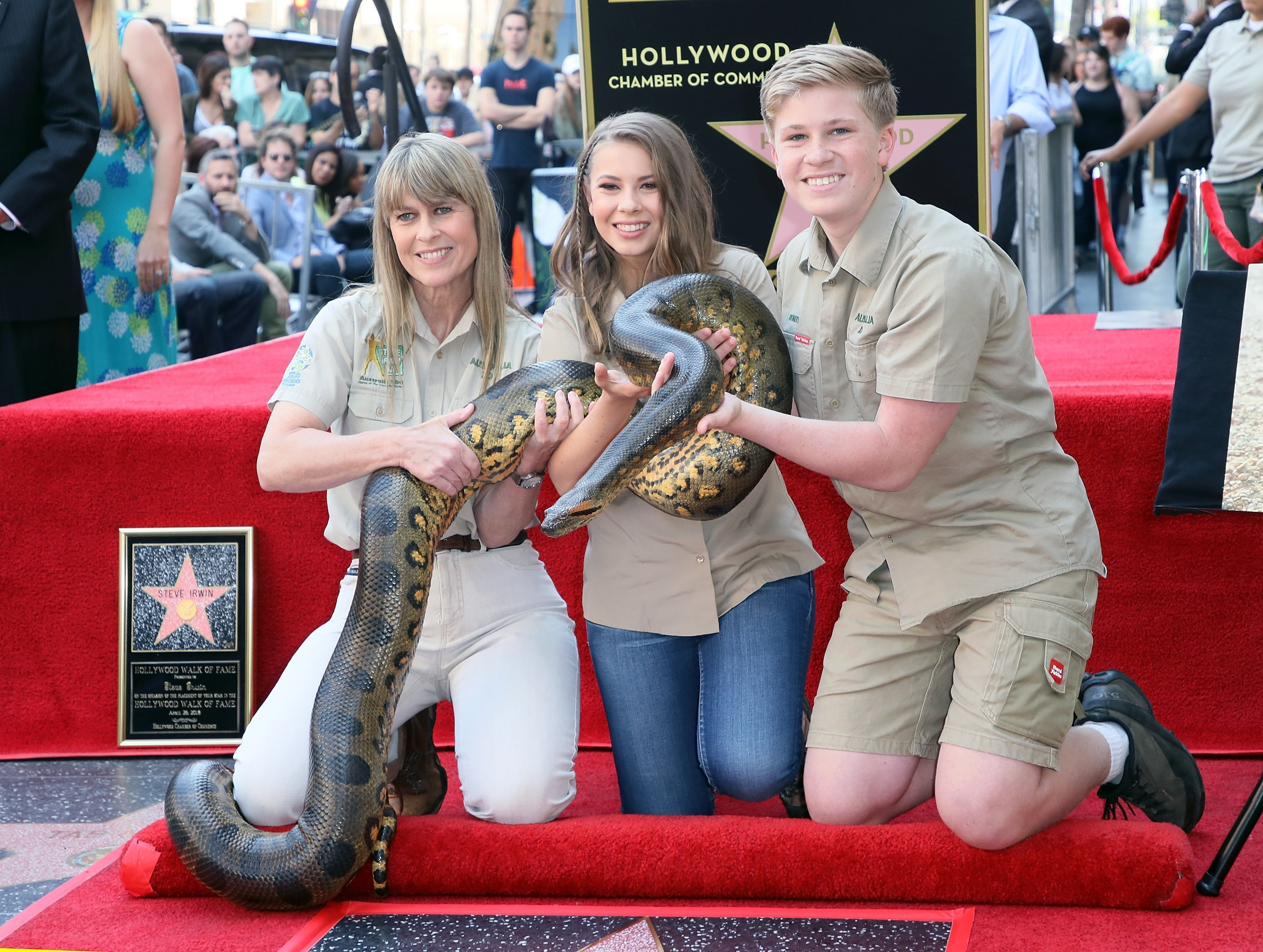 Terri, Bindi and Robert Irwin on the walk of fame as Steve Irwin is honored posthumously with a Star on the Hollywood Walk of Fame on April 26, 2018 | Photo: Getty Images