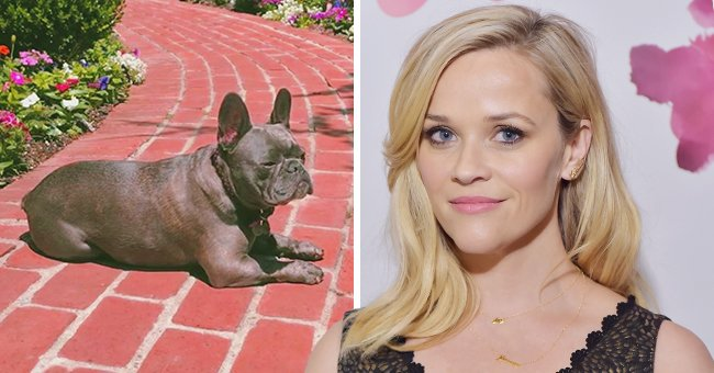 Here's How Reese Witherspoon and Her Daughter Ava Mourned the Loss of Their Beloved Pet, Pepper