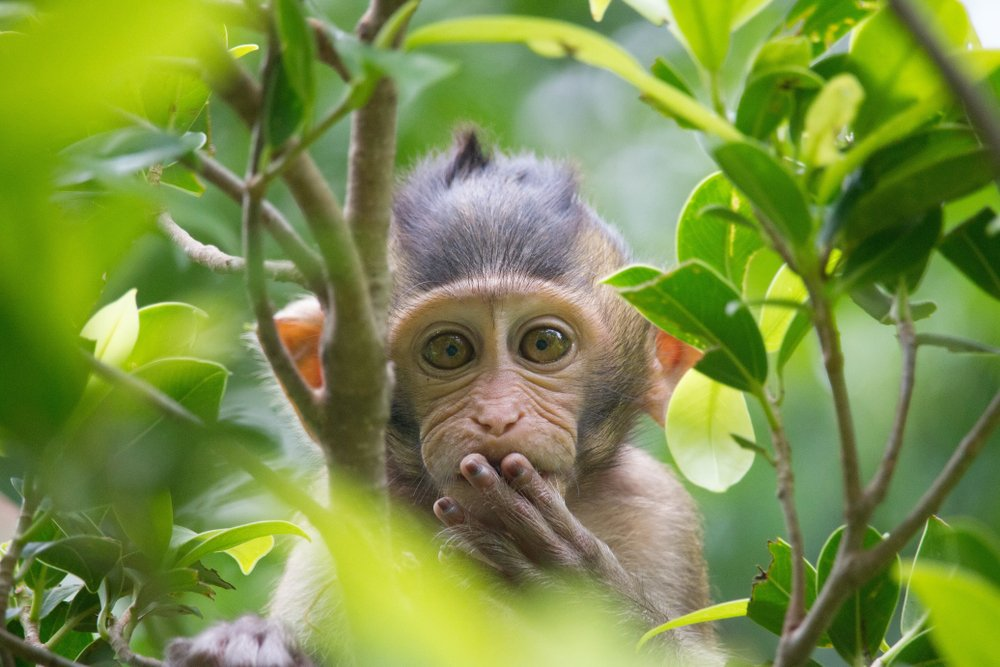 A photo of a monkey in the forest.   Photo: Shutterstock