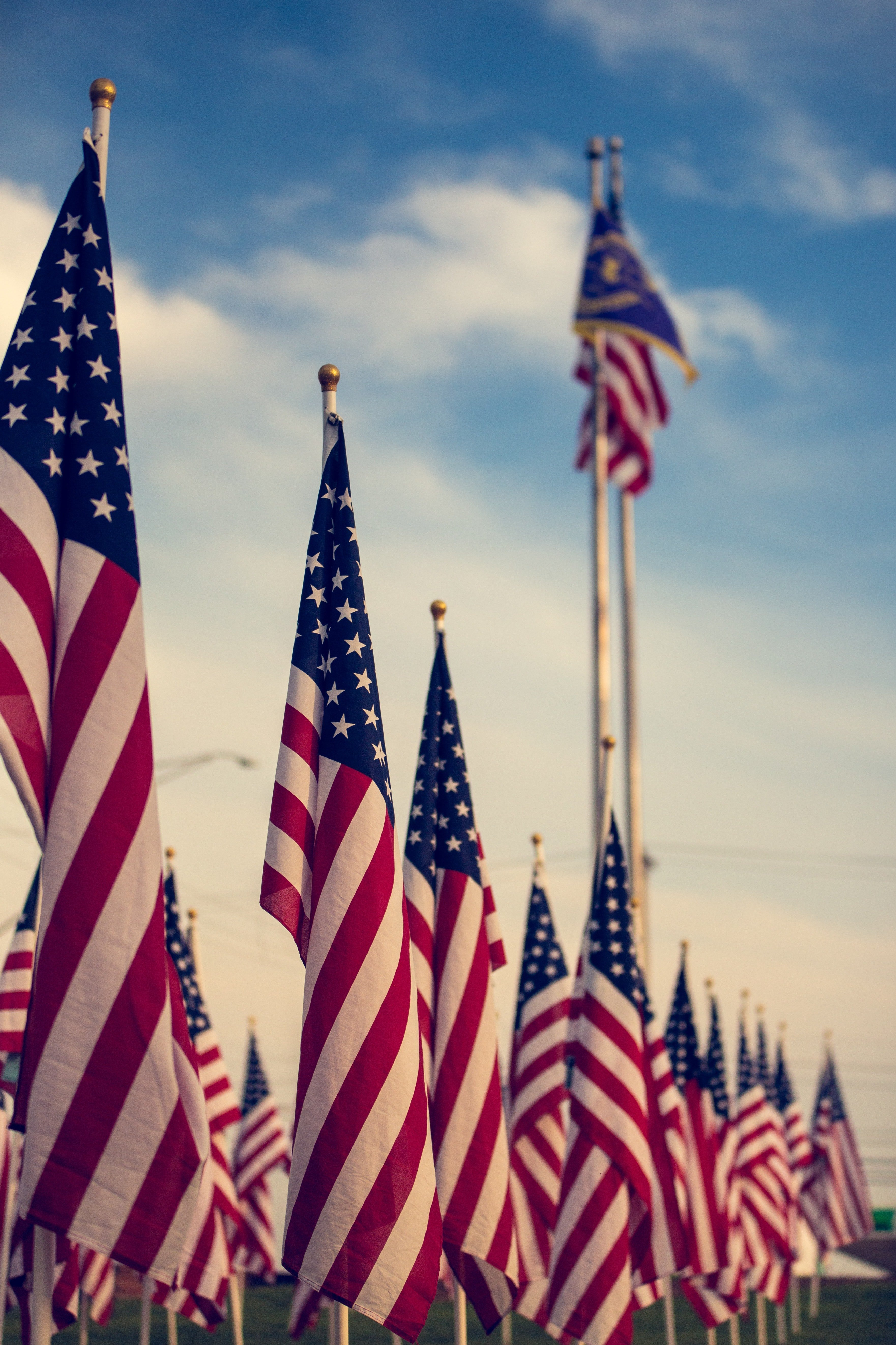 American flags lined-up | Photo: Pexels