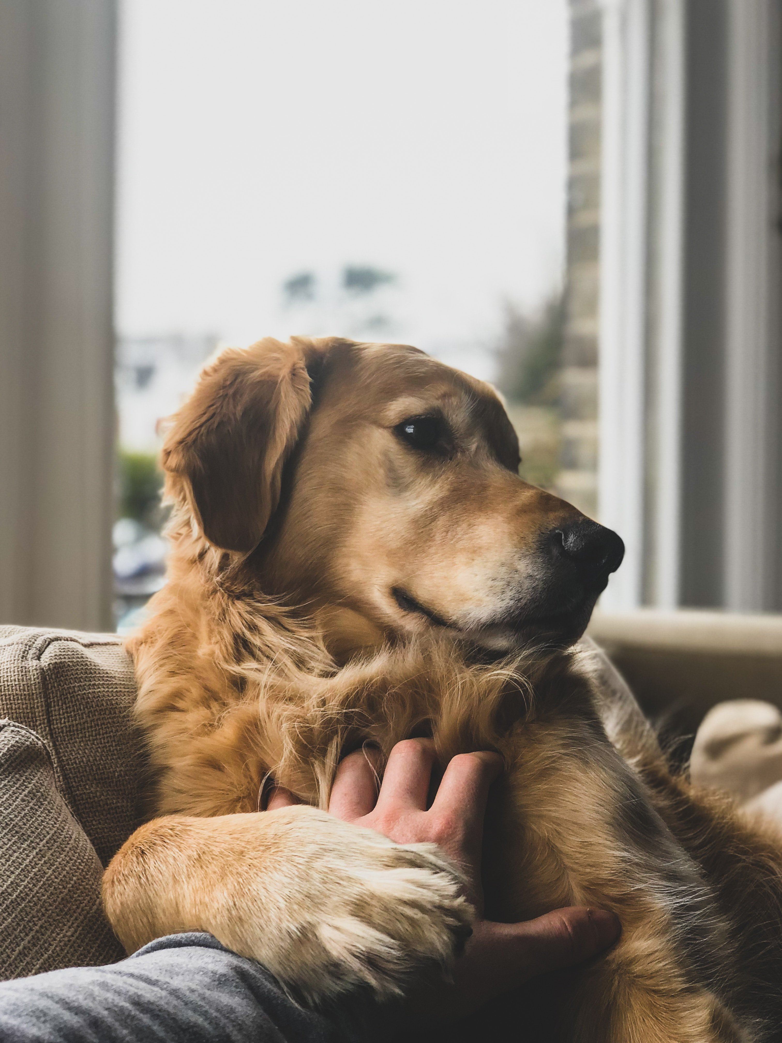 A dog sitting on the sofa indoors. | Source: Unsplash