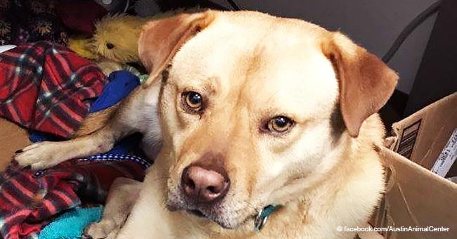 La agridulce razón por la cual perrito adoptado de refugio sigue hurtando de sus amigos humanos
