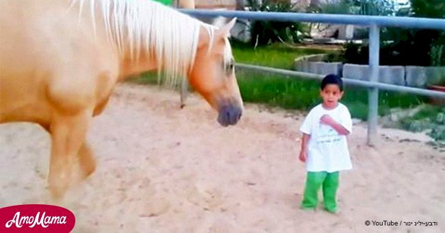 Horse walks up to a boy with rare disorder while mom films their heart-rending interaction