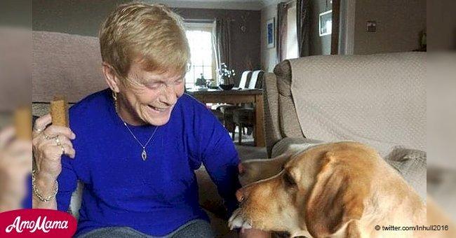 Conductor atropelló a perro y lo dejó morir en brazos de su anciana dueña en Nafferton