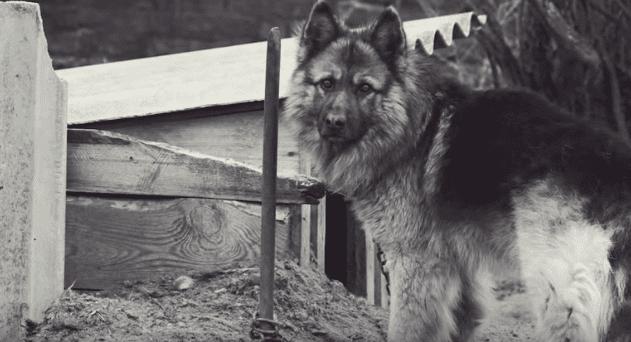 Perro triste. | Imagen tomada de: YouTube/Rocky Kanaka