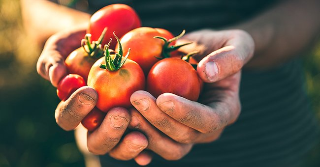 Daily Joke: An Old Man Wanted to Plant His Tomatoes