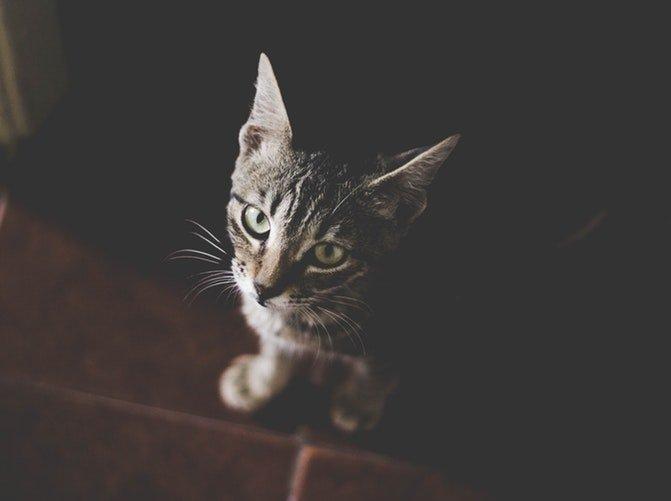 Un chat fixant le caméra | Unsplash