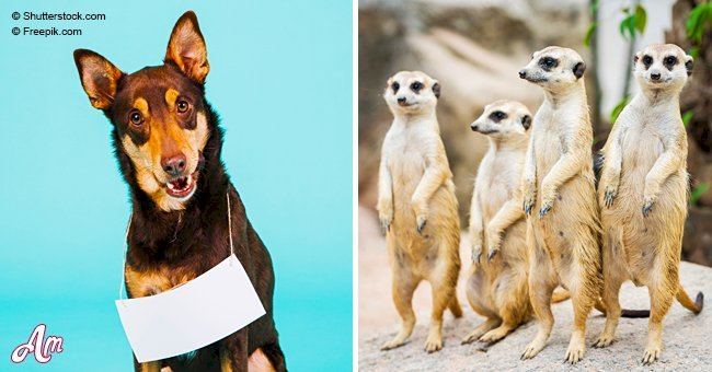 Find out what's your animal personality type