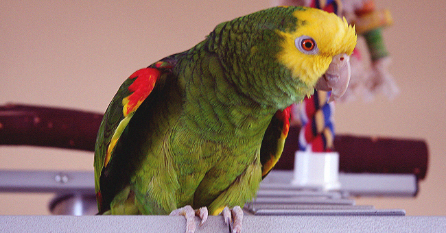 Daily Joke: Woman Gave the Repairman Advice to Not Talk to Her Parrot