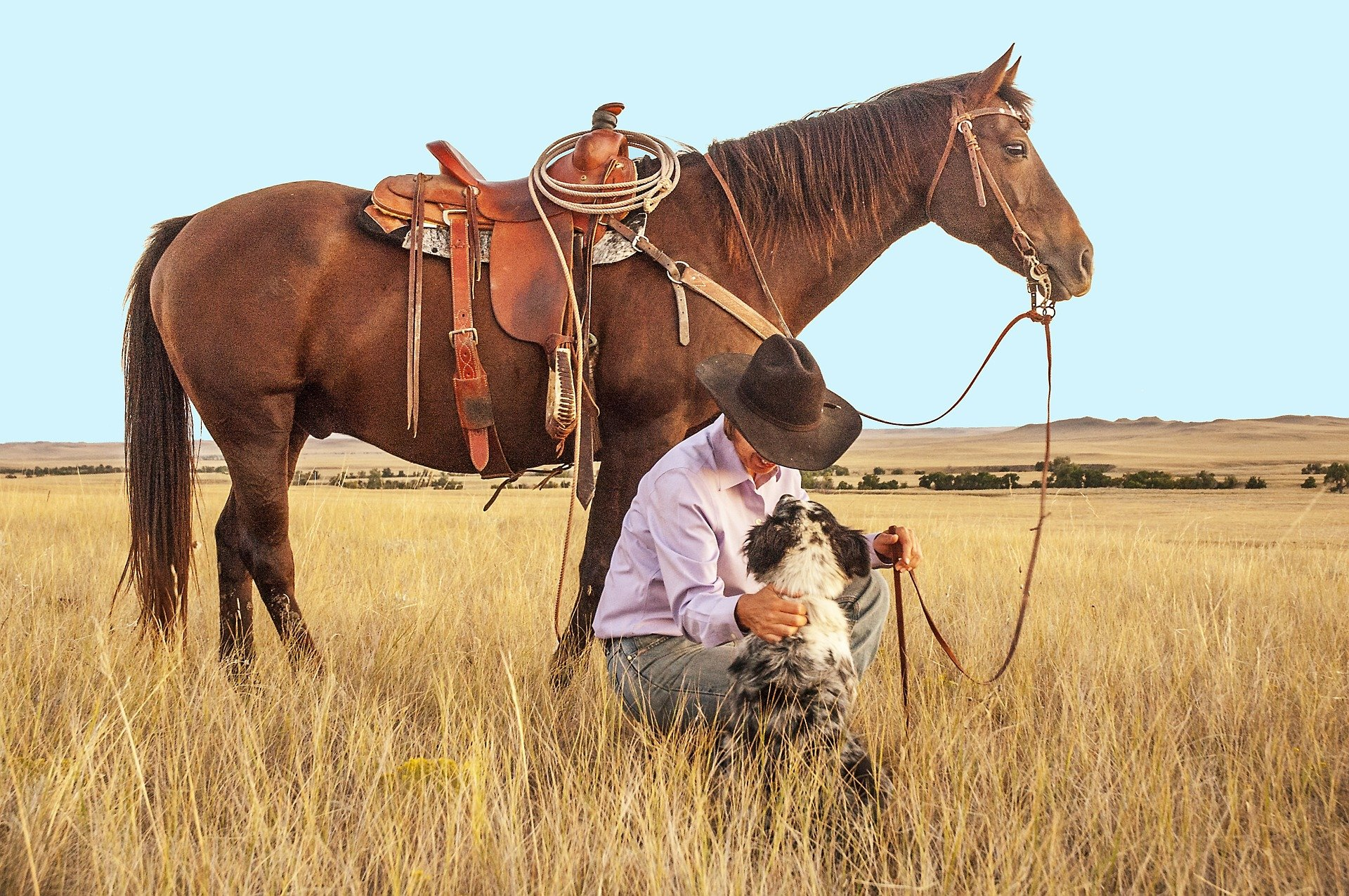 Cowboy with horse and dog | Source: Pixabay