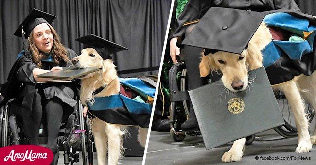 Ein treuer Hund, der seiner Besitzerin mit chronischen Schmerzen half, bekommt ein Zeugnis während der Abschlussfeier