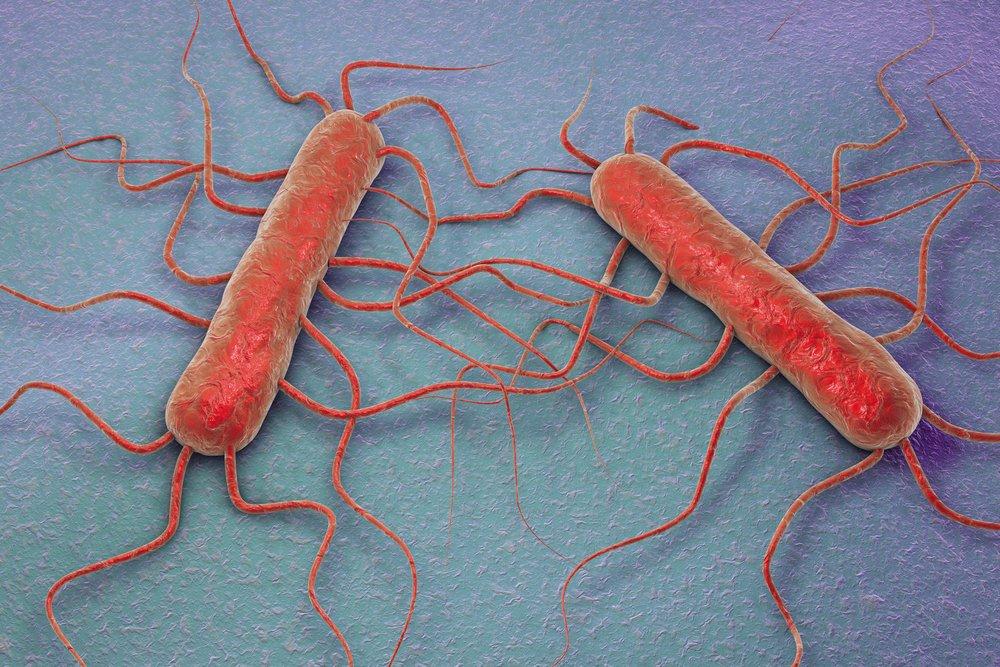 Modelos 3D de bacterias de Listeria. || Fuente: Shutterstock
