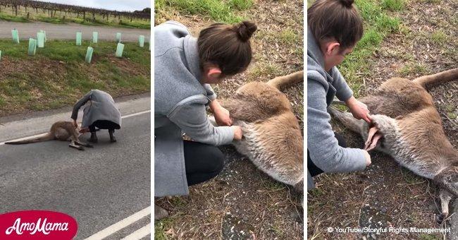 Se souvenant du grand moment où des femmes ont sauvé le bébé kangourou de la poche de sa mère morte