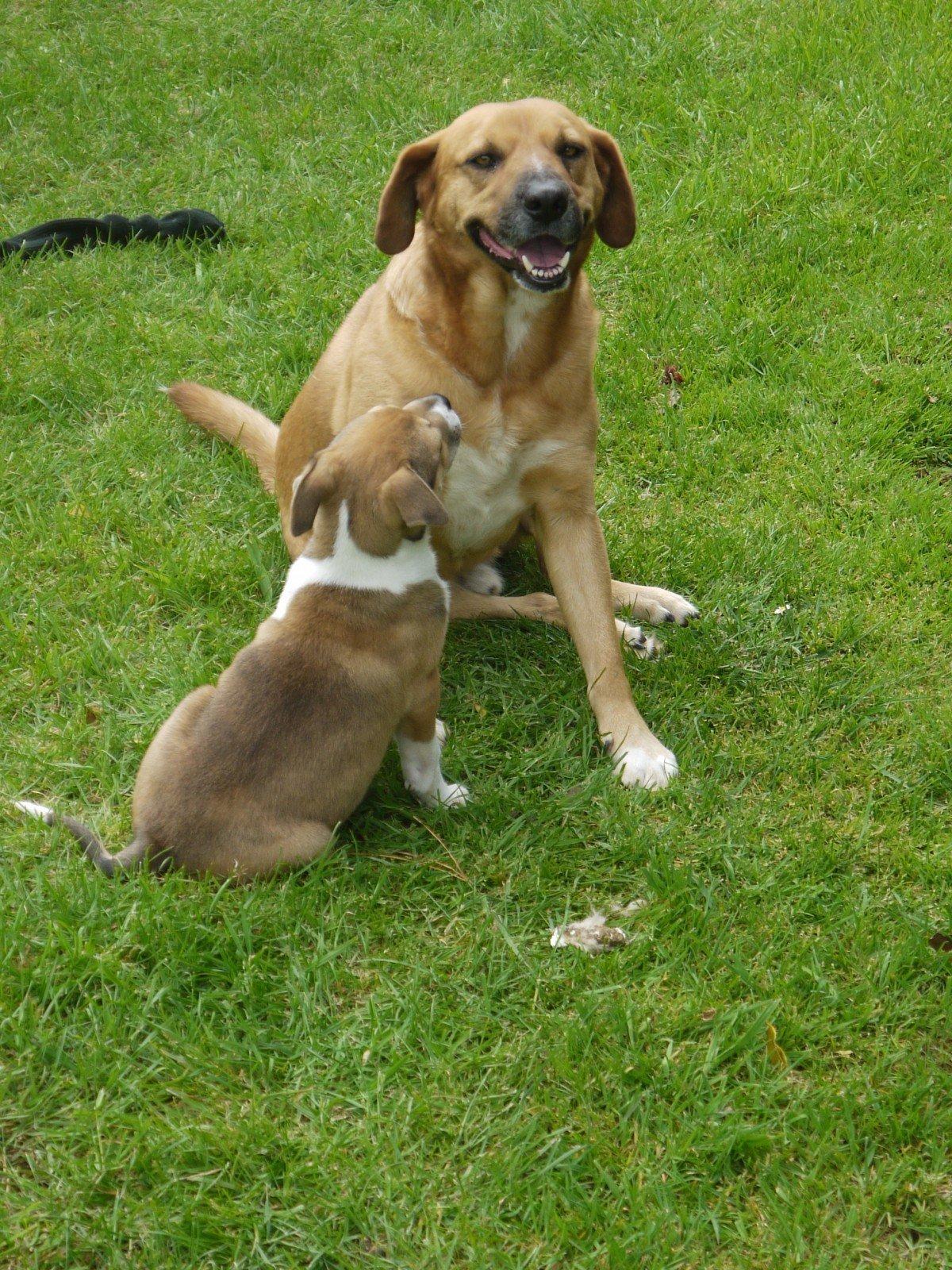 Une mère et son chiot. l Source: Pxhere