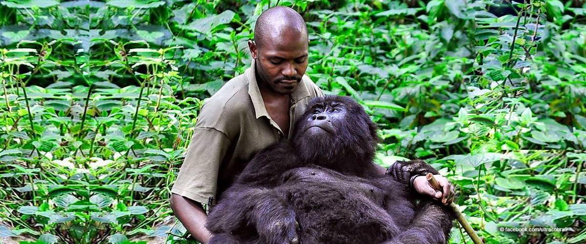 Las selfies de un guardabosques con gorilas en peligro de extinción que se hicieron virales