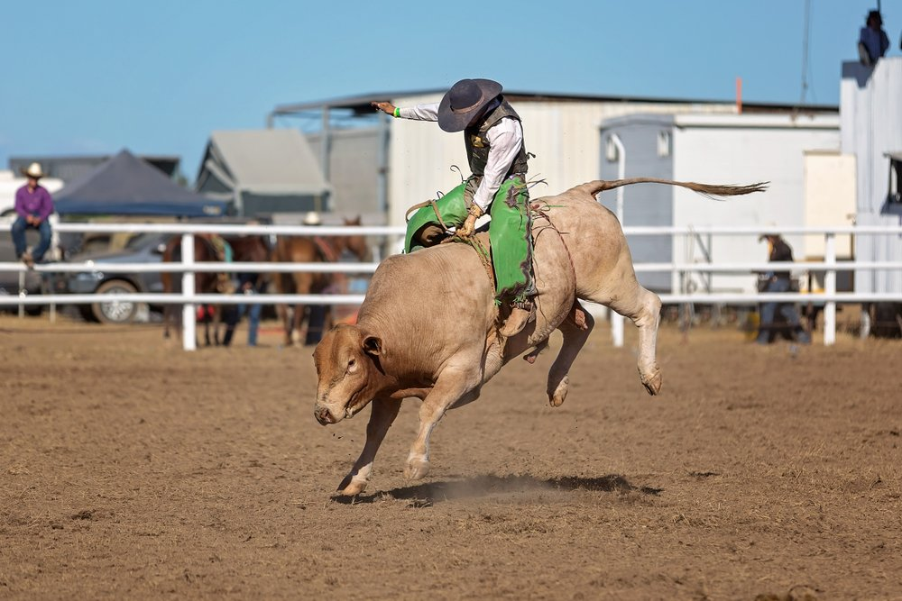 A cowboy competing in a bull-riding competition at a country rodeo | Photo: Shutterstock/Jackson Stock Photography