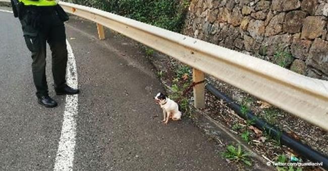 Perrito fue abandonado cruelmente atado en una estrecha autopista en Gran Canaria