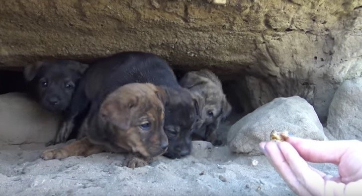 Quelle: YouTube / Hope For Paws - Official Rescue Channel