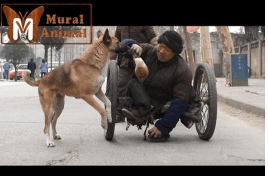 Les spectateurs se sont arrêtés pour prendre des photos et enregistrer des vidéos avec leur téléphone quand ils l'ont remarqué | Image : YouTube : Mural AnimalBlog