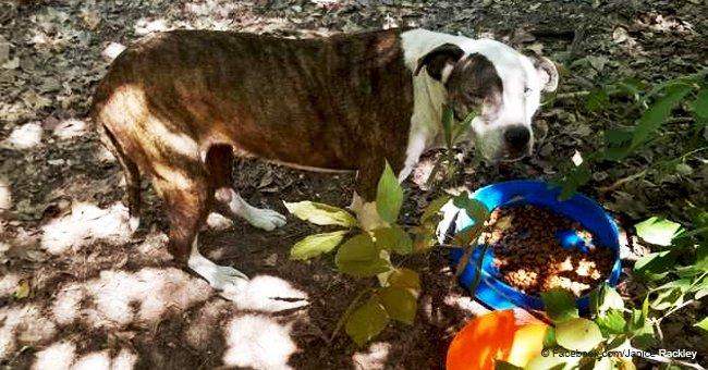 Buscó a su perra perdida durante 8 años, pero una amable mujer la estaba cuidando