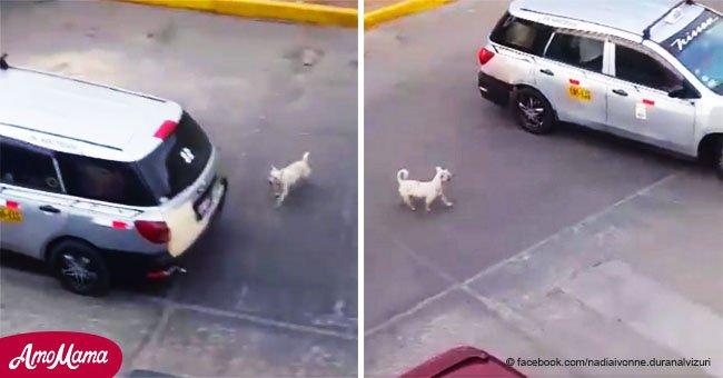Une famille a laissé son chien au milieu de la piste et son acte sans cœur a été filmé par un passant