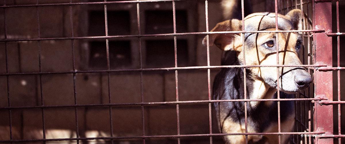 Frau berichtete, dass Hund ganze Nacht in kleinem Raum eingesperrt ist, um Geschäft zu schützen