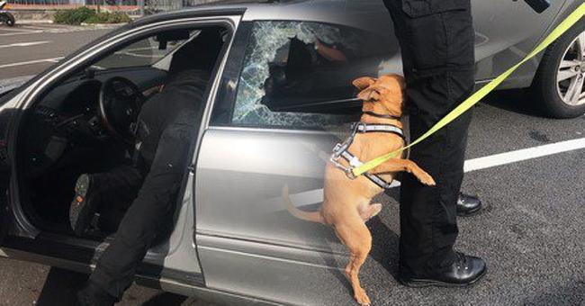 Policía rescata a un perro que estuvo atrapado en un auto caliente por más de tres horas