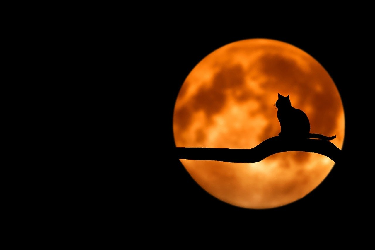 Cat silhouetted against a full moon. | Source: Pixabay.