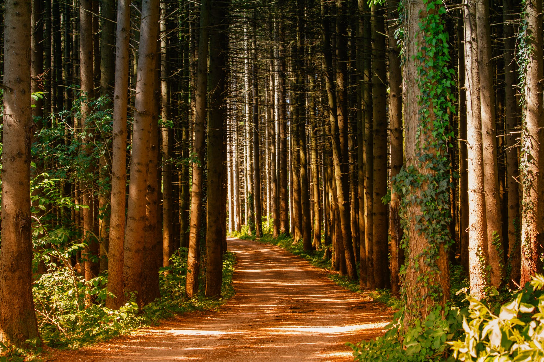 Forest path | Source: Pexels