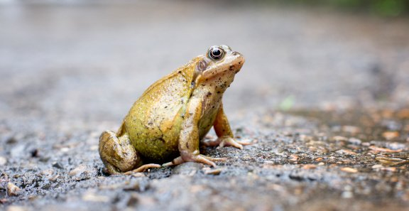 A close up of a frog crouching | Photo: Getty images
