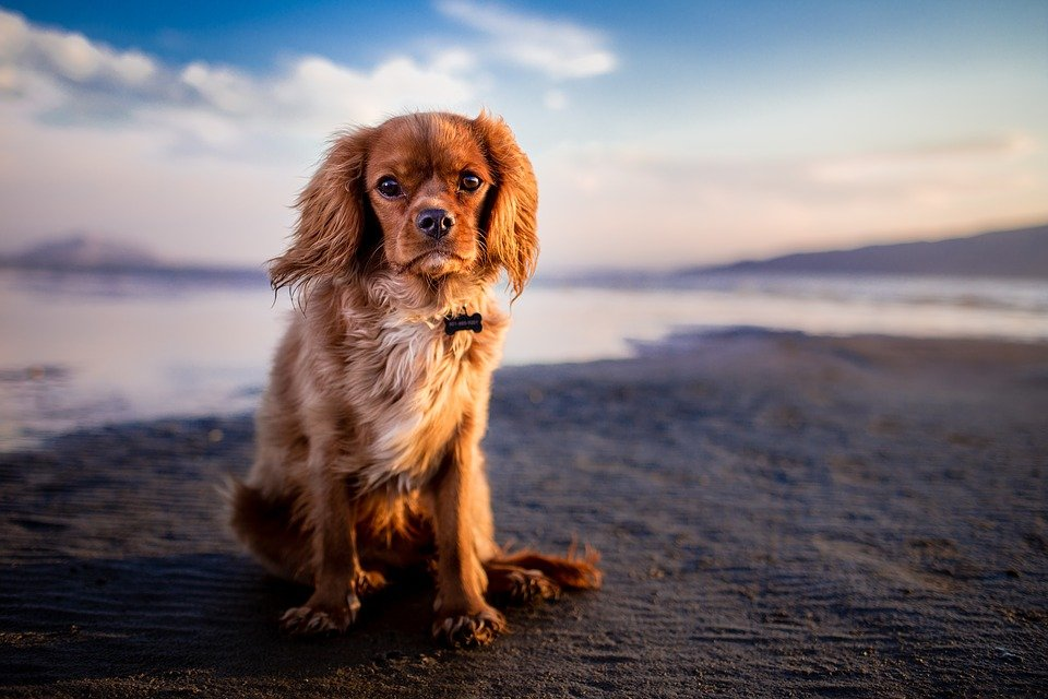 Un adorable chien qui regarde. | Photo : Pixabay