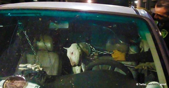 Video de policías rescatando a un perro que dejaron en una jaula y encadenado para que muera