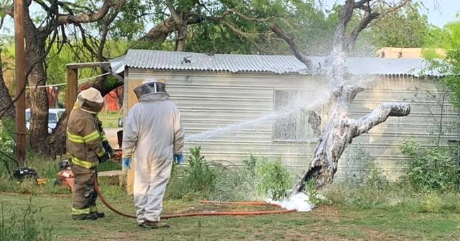 70-Year-Old Texas Man Dies after Being Attacked by Bees – inside the Tragic Incident