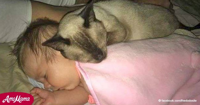 Former stray cat can't get enough of newborn human baby