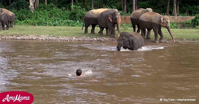 Adorable momento en que elefante bebé nota hombre 'hundiéndose' en río y corre a ayudar