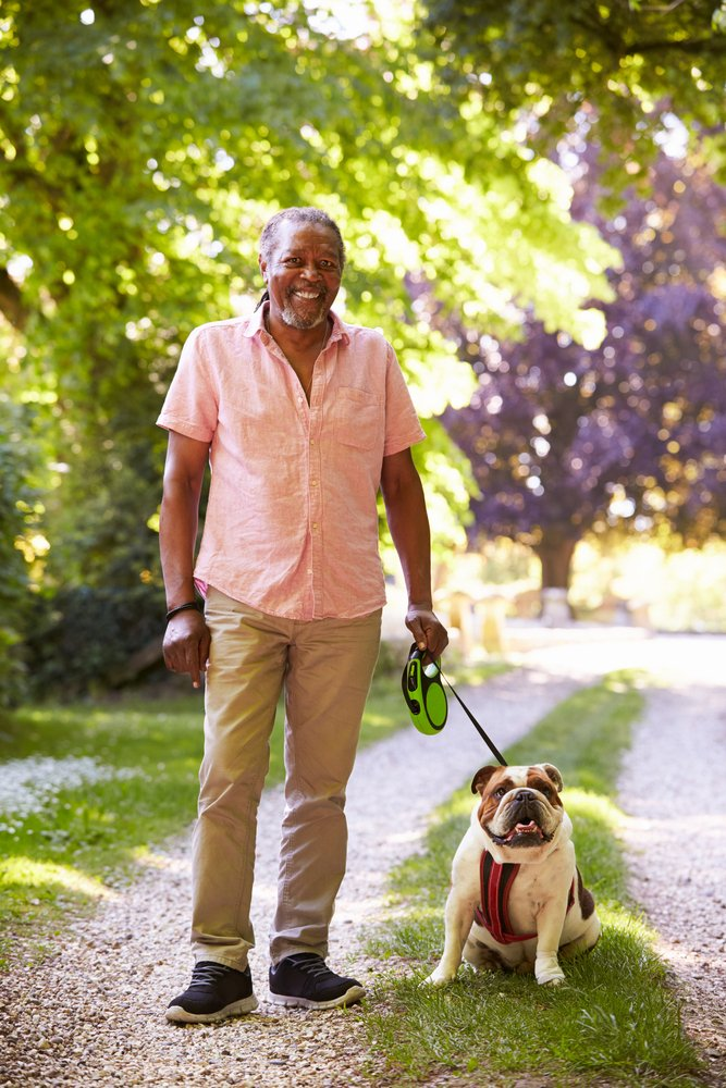A portrait of a senior man walking a pet bulldog. | Photo: Shutterstock