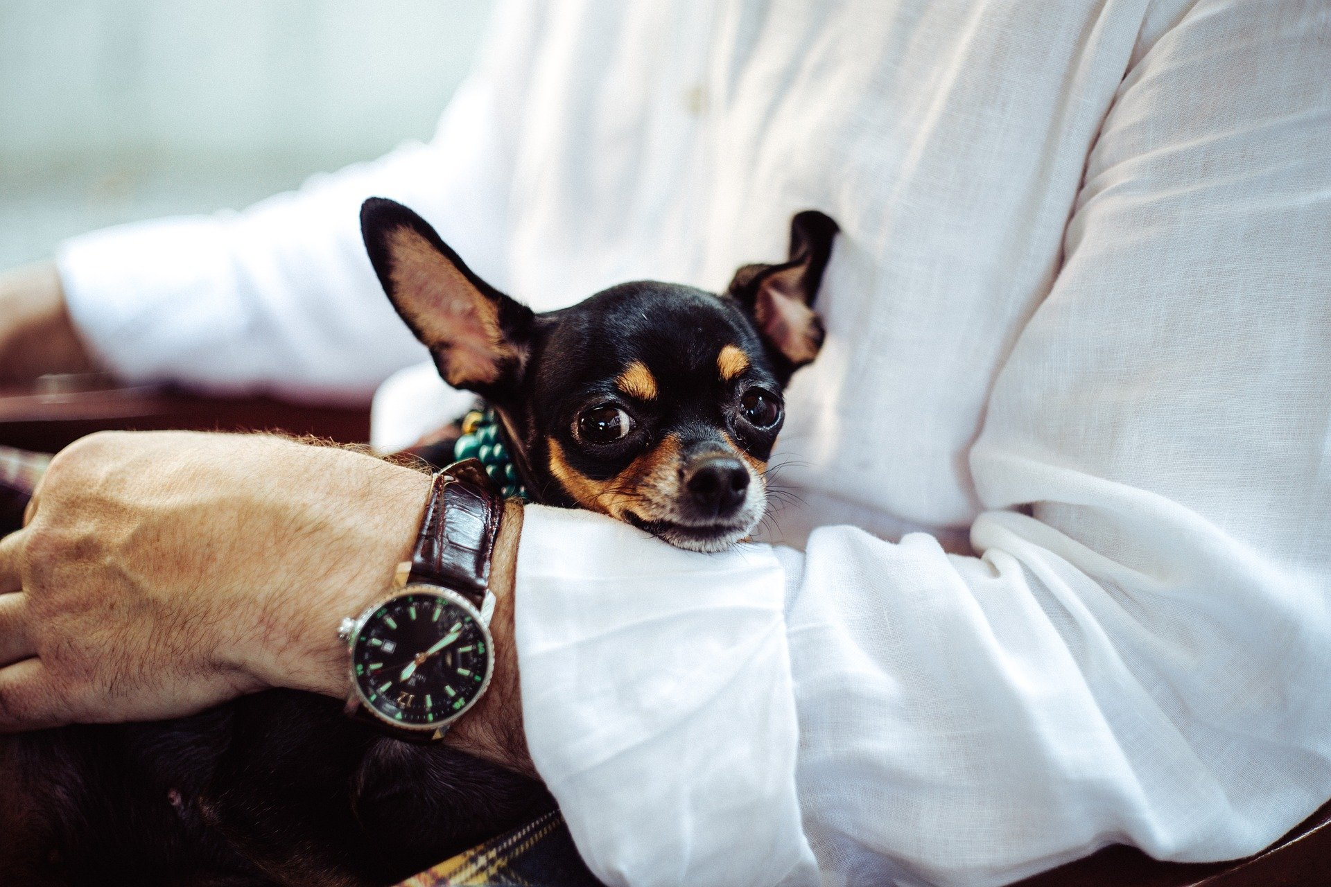 Man sitting down with a chihuahua in his arms. | Source: Pixabay