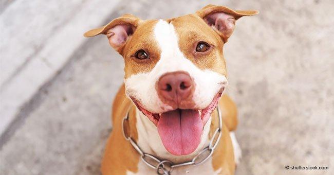 La adorable reacción de un perro cuando su dueño le revela que está libre de cáncer