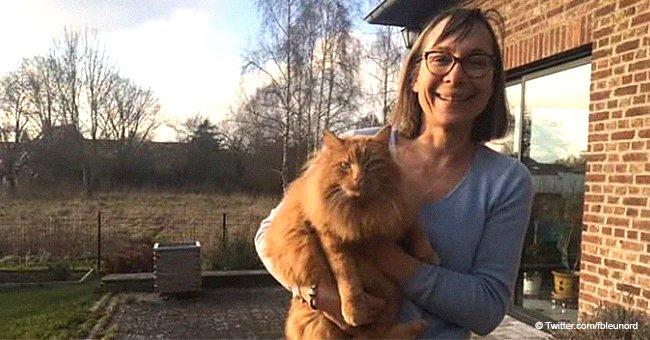 """""""Voyage impeccable"""": au Nord, Caramel, un chat perdu, rentre à la maison en BlaBlaCar"""