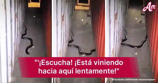 Cobra escupidora causó pánico entre los trabajadores del puerto de Algeciras (Video)