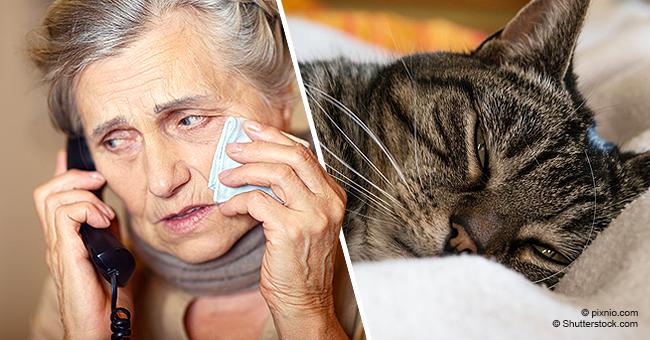 Une vieille dame endeuillée appelle la police à la suite du décès de son chat et le policier trouve le moyen de la réconforter.