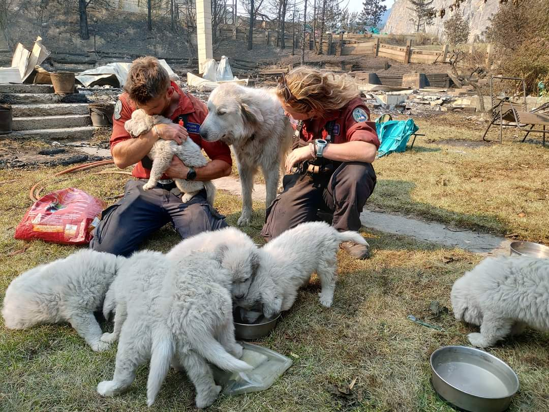 The dog and her puppies being comforted by the firefighters   Photo: https://www.reddit.com/r/HumansBeingBros/u/thevancouverspecial