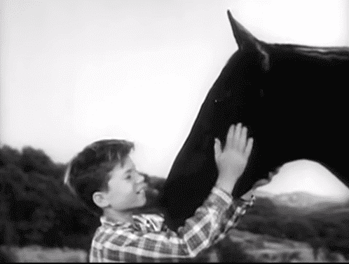 """A scene of the intro of """"Fury"""" showing Diamond caressing the horse 