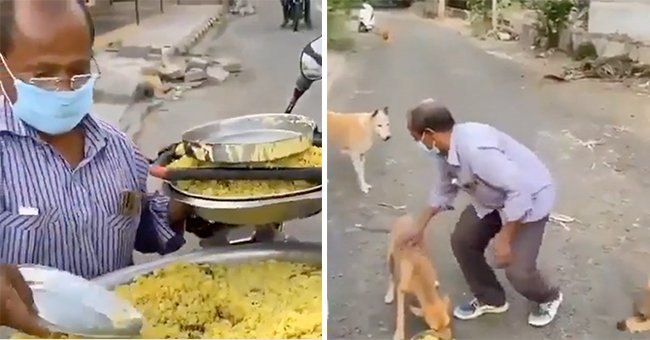 This Man Feeds about 150 Stray Dogs Daily — He's Done It for 11 Years