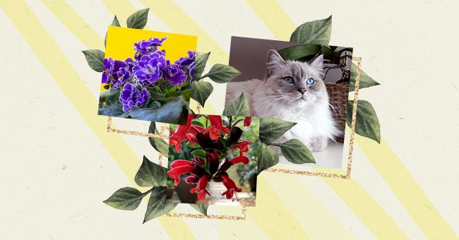 10 House Plants Perfect For Cat Owners