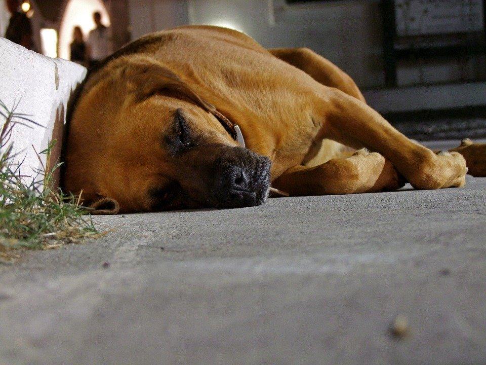 Perro dormido en la calle . | Imagen: Pixabay