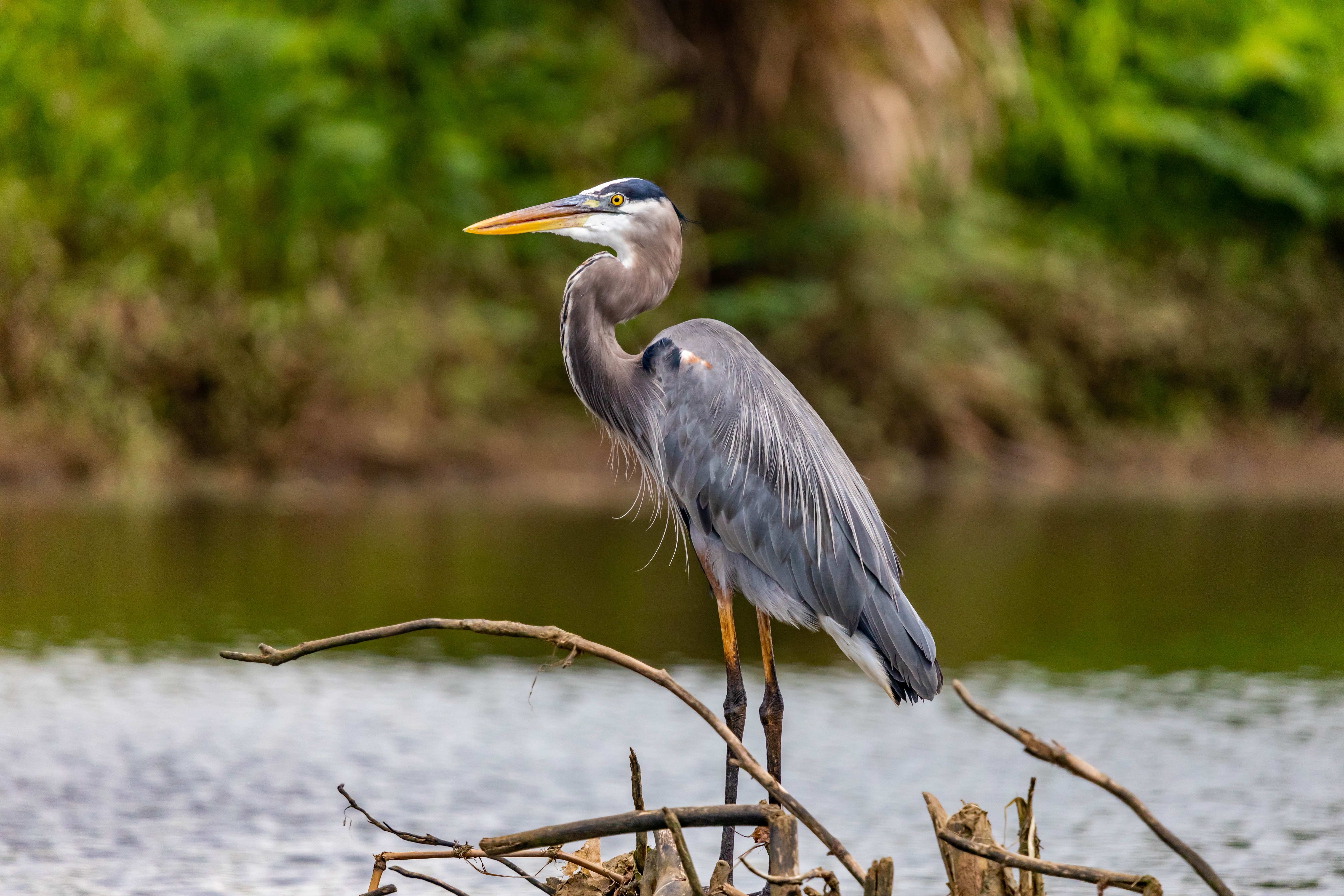 A heron perched on a stump. | Photo: Pexels